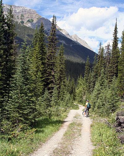 Taylor Trail