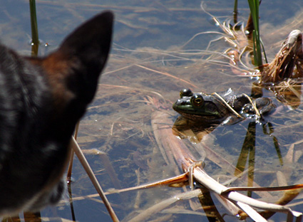 Tootsie and the Frog have a stare down
