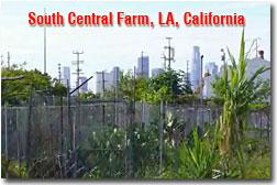 South Central Farm
