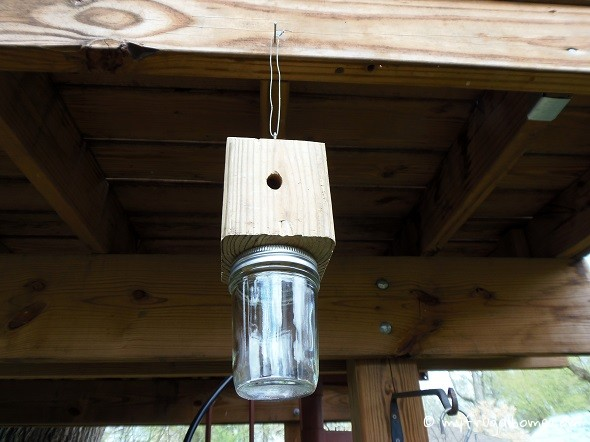 Here Are Instructions For A Simple But Effective Carpenter Bee Trap
